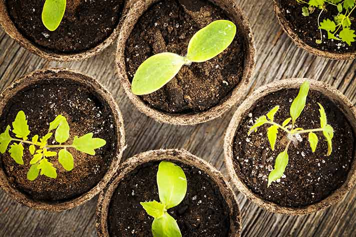 Planter Pots Sprouting - Sustainability